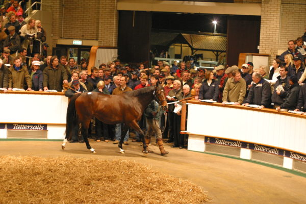 Tattersalls Sale Ring